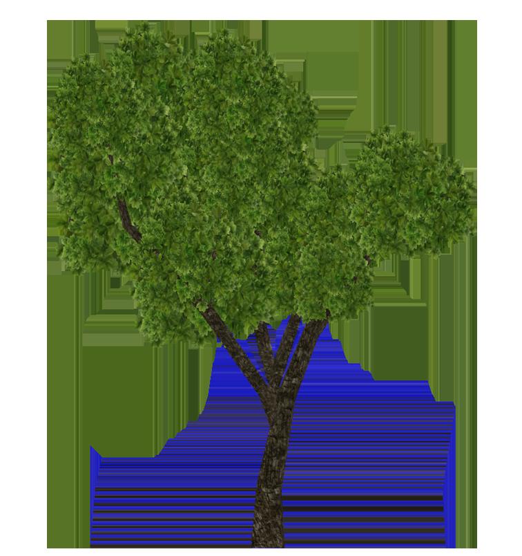 Sal Tree Aurora Designs Zt2 Download Library Wiki