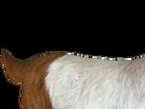 Boer Goat (slice)