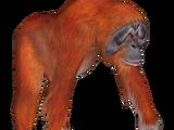 Sumatran Orangutan (Dinosaur)