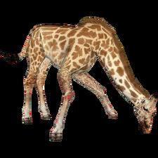 West African Giraffe DutchDesigns