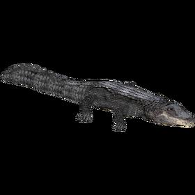 AlligatorAmerican JimmyHoopz