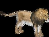 Lion (Tyranachu)