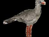 Red-legged Seriema (Lgcfm & Ulquiorra)