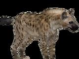 Spotted Hyena (Zerosvalmont)