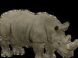 White Rhinoceros (STD Binoculars)