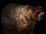 Kodiak Bear (slice)