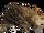 Short-beaked Echidna (Hispa Designs)