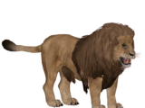 Barbary Lion (Robert)