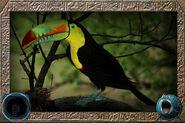 Keel-billed Toucan (HENDRIX & Zerosvalmont)