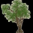 TreeHala slice
