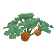 Pumpkin (Feral Designs)