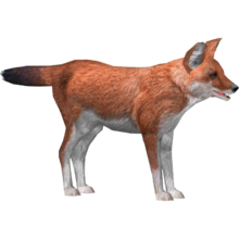 Southern Dhole Tamara Henson Zt2 Download Library Wiki