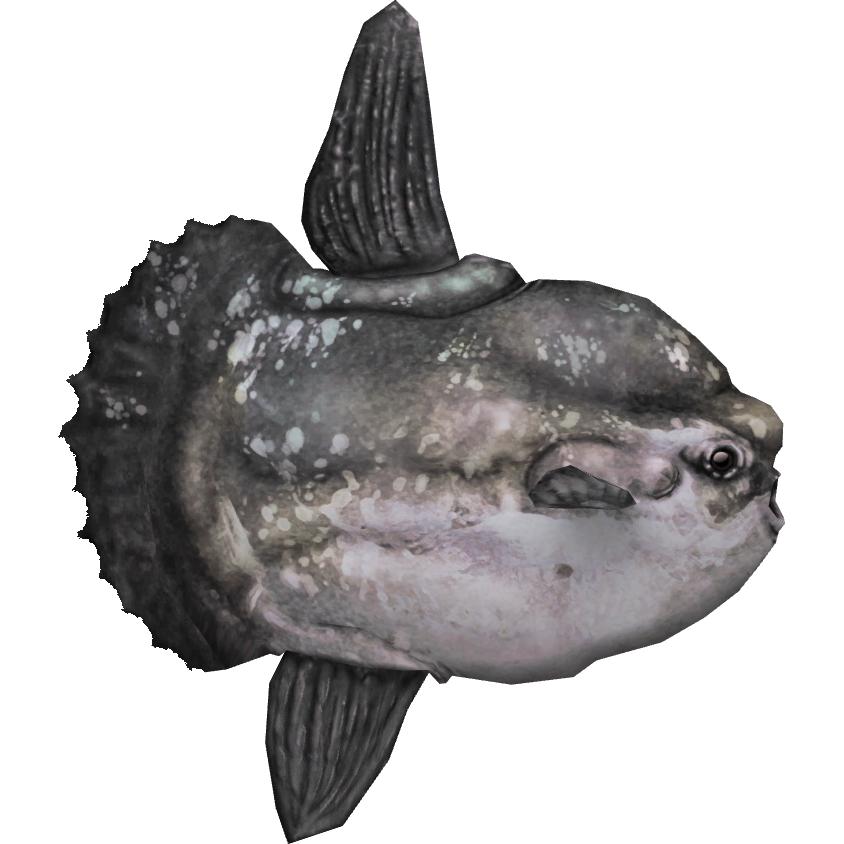 Ocean Sunfish Hendrix Zt2 Download Library Wiki