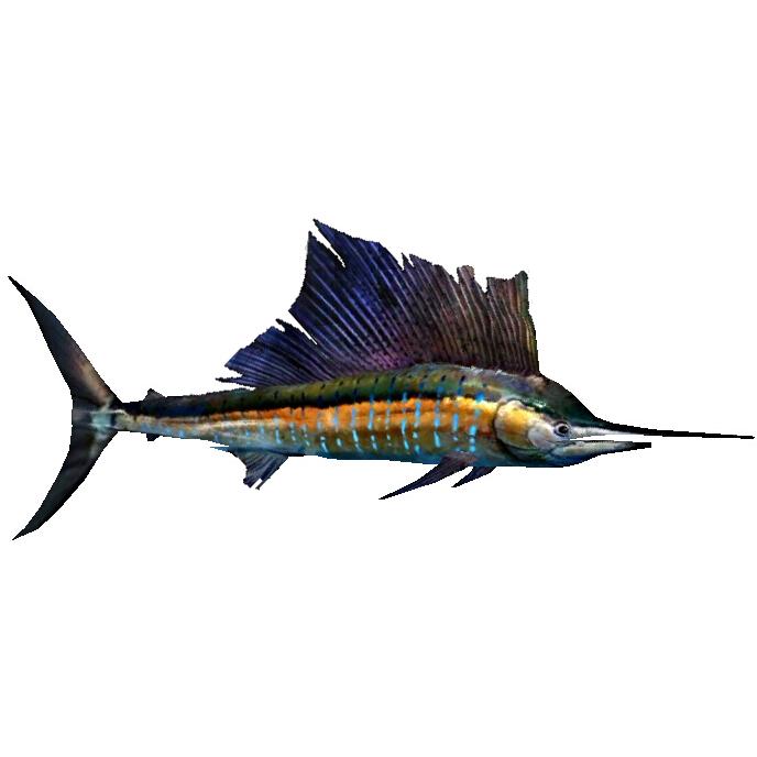 Atlantic Sailfish (TheriDK) | ZT2 Download Library Wiki | FANDOM