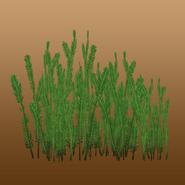 Caulerpa taxifolia (Nessich) Render