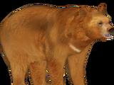 Golden Moon Bear (Tamara Henson)