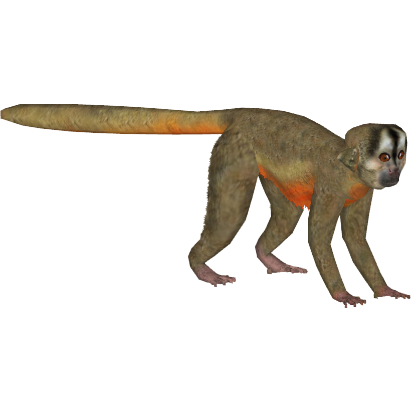 Peruvian Night Monkey Tamara Henson Zt2 Download