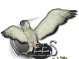Extreme Endangered Species (Eryel & Zerosvalmont)