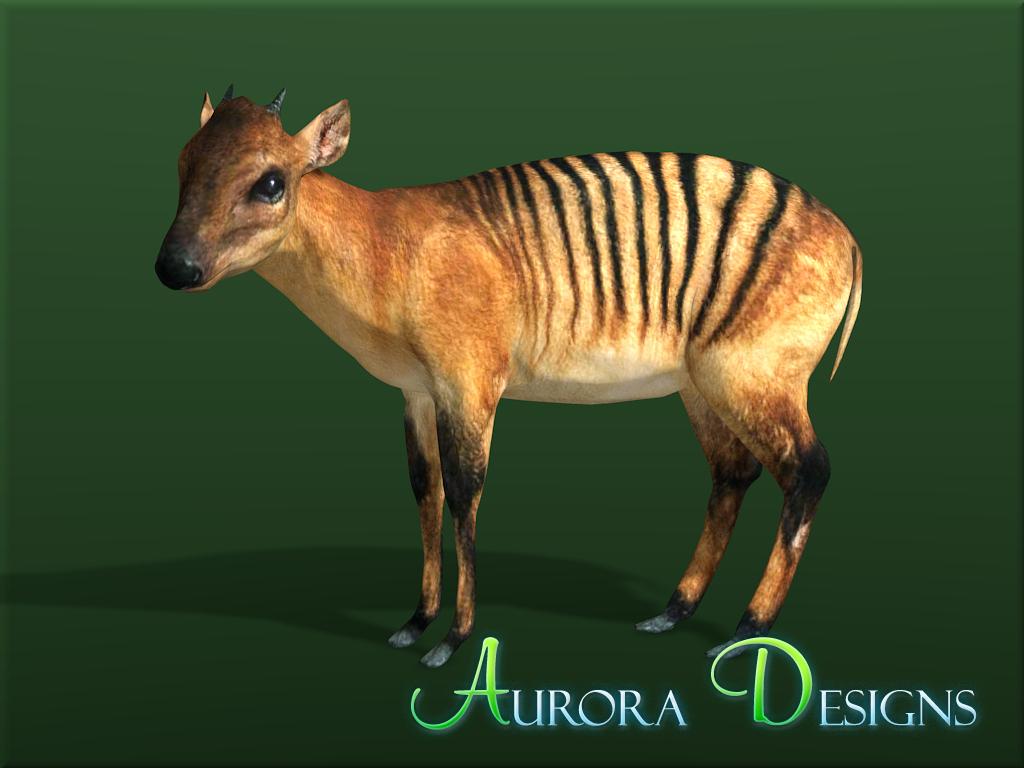 Zebra Duiker Aurora Designs Zt2 Download Library Wiki