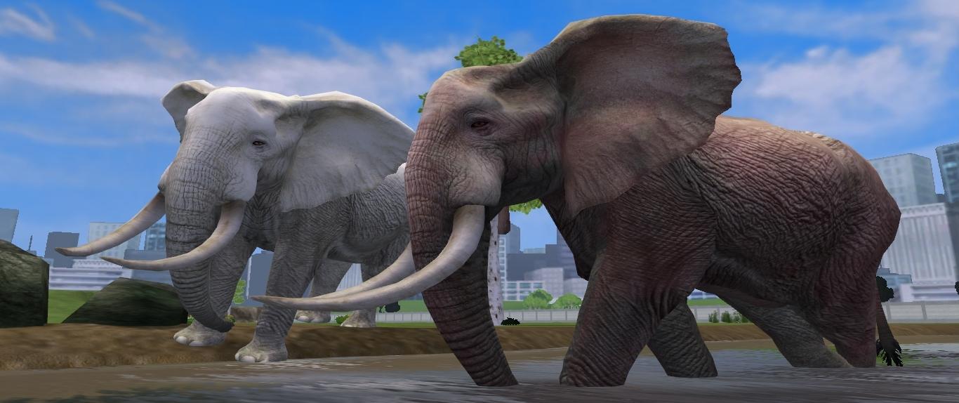 African Bush Elephant Aurora Designs Zt2 Download