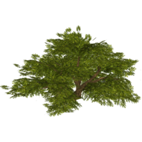 Rainbush slice