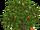 Orange Tree (slice)