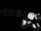 Black-and-White Ruffed Lemur (Azrael)