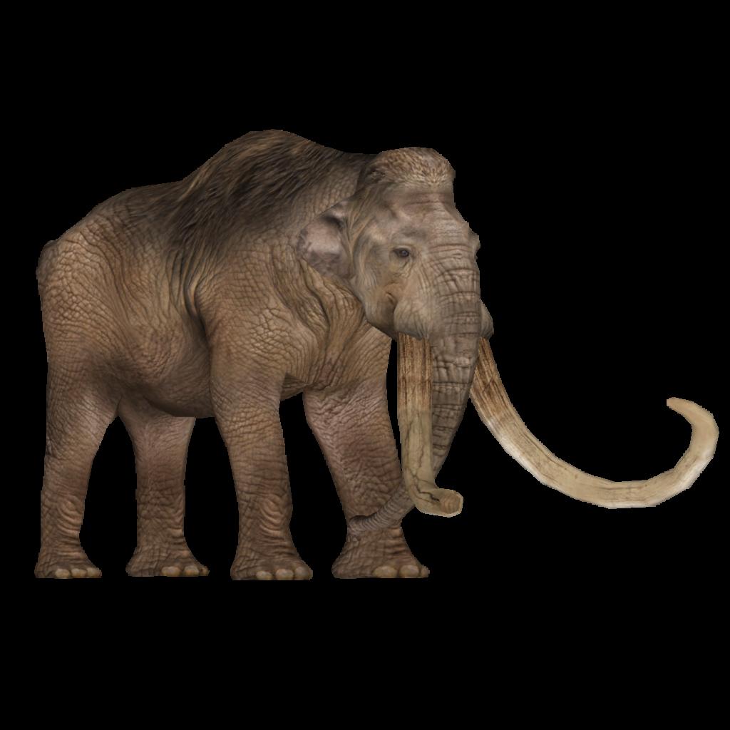Columbian Mammoth Bunyupy Eryel Maximilian