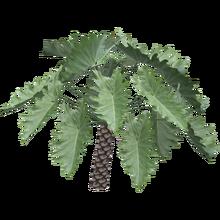 Philodendron Undulatum (FelipeepileF)