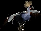 Grey Crowned Crane (Scott)