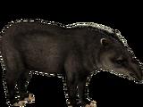 Kabomani Tapir (DRAGON-unit911)