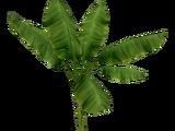 Palm Tree (Zoker)