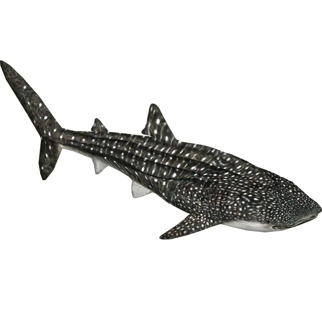 Whale Shark Zerosvalmont Zt2 Download Library Wiki
