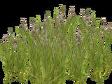 Reed (Kangorilaphant)