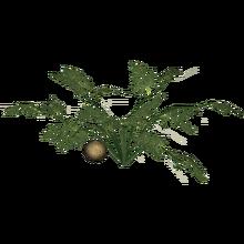 Cantaloupe (Feral Designs)