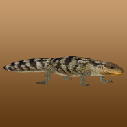 Blotched Blue-tongued Lizard (MiBound) Render