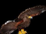 Harris' Hawk (16529950)