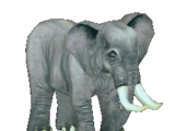 African Elephant (wolfkid92)