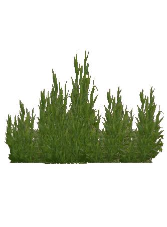 Seaweed Cat Amp Juicy Zt2 Download Library Wiki Fandom