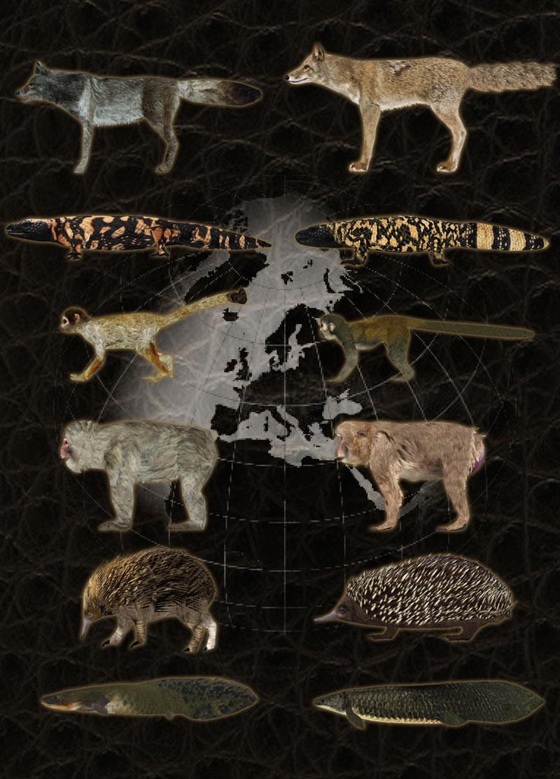 Fauna del Mundo (Hispa Designs)   ZT2 Download Library Wiki
