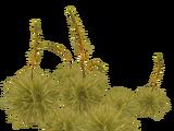 Spear Grass (Aurora Designs)