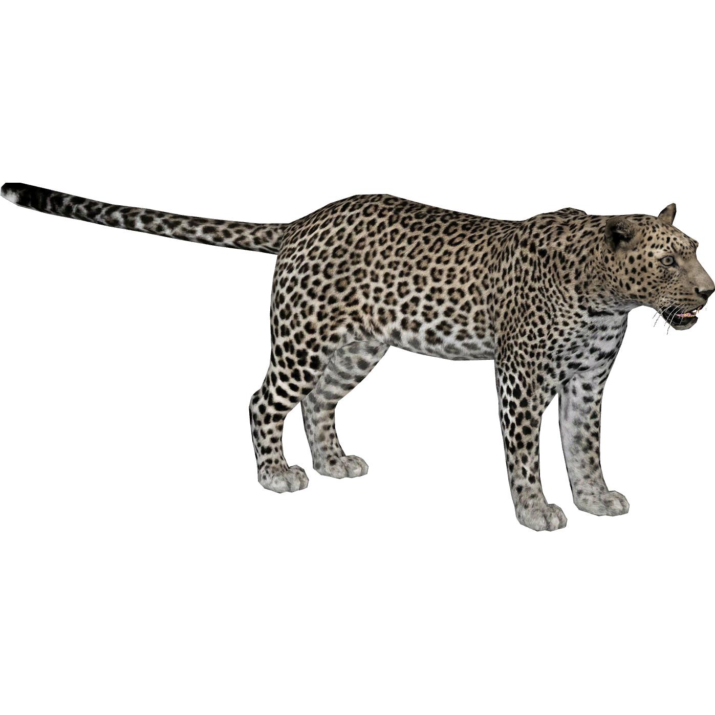 zt2 leopard