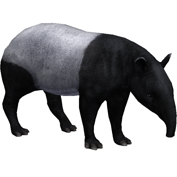 Malayan Tapir Aurora Designs Zt2 Download Library Wiki