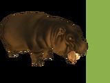 Sicilian Pygmy Hippopotamus (Dinosaur)