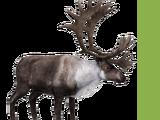 Caribou (Aurora Designs)