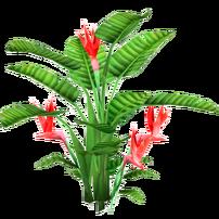 Strelitzia slice