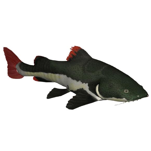 Red Tail Catfish   Redtail Catfish Dutchdesigns Zt2 Download Library Wiki Fandom
