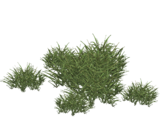 Neptune Grass (HENDRIX)