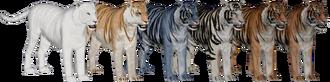 TigerBengal AD DB Variants