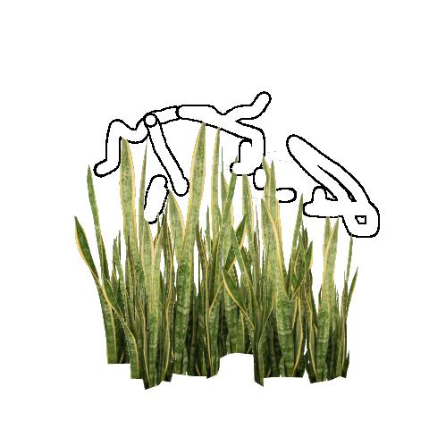 File:Snake_Plant_(Felipe) on Green Objects